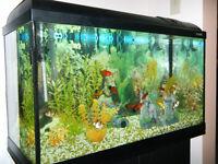 "Aquarium 31 gallons (31""x19""x14"") avec meuble"