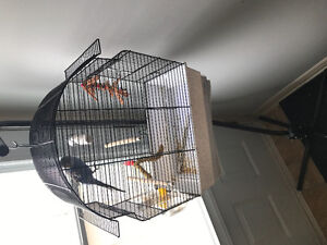Budgi bird with cage and stand