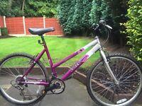 ladies freespirit horizon mountain bike