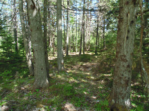 Wooded 3 acre lot with 900 ft of road frontage