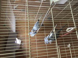 Elevages Direct surplus d oiseaux exotiques