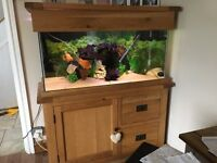 Solid oak fish tank