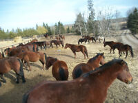 Accommodations and meals on working horse ranch for helping