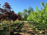 Tree Farm Manager