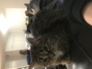 2 cats to give away to a loving home