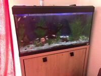 Roma 200L fish tank with fish