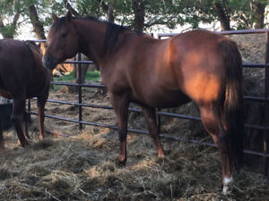 EZ Loverboy- 2010 AQHA Stallion