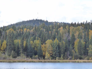 Buy the timber, get 80 acres free! Prince George British Columbia image 7