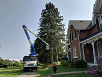 Fully Insured/Certified Tree Service - Competitive Pricing