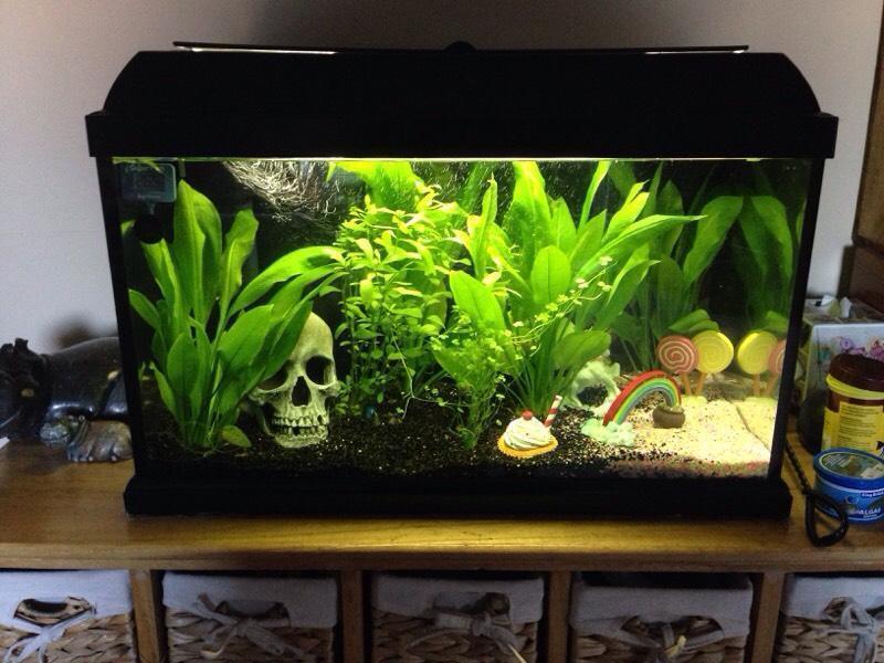 60l fish tank aquarium full set up in st george bristol for Setting up a fish tank