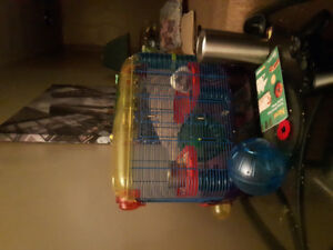 Syrian long haired hamster, hamster cage and hamster ball