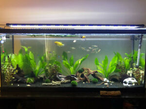 75 gal tank- NEW fluval FX4 filter, python cleaner, ALL SUPPLIES