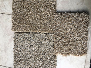 Inst. Incld $2.69 (Lam.)- Carpet $1.99 - vinyl plank $2.99 Cambridge Kitchener Area image 6
