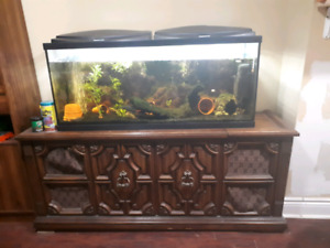 55 gallon fish tank with everything you could possibly need