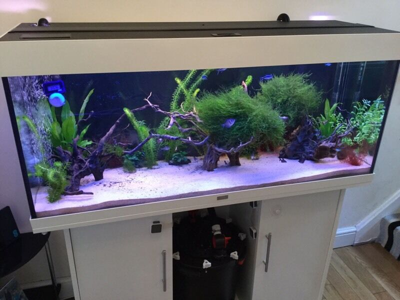 juwel rio 240 white gloss aquarium fish tank in stevenston north ayrshire gumtree. Black Bedroom Furniture Sets. Home Design Ideas