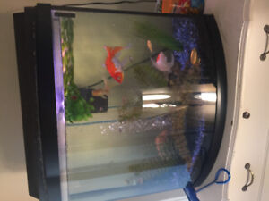 Large bow front tank, accessories and fish!