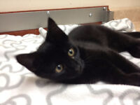 Gentle and loving kittens for adoption