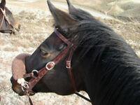 Registered Appendix 1/4 Horse Mare For Sale