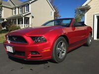 2013 Ford Mustang Convertible - Low Kms