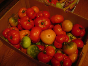 Heirloom Tomatoes and Mason Jars