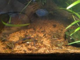 10 mixed shrimps