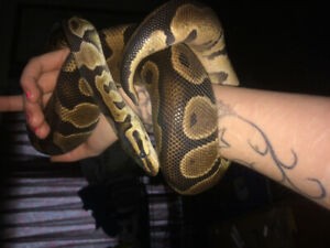 Looking to rehome your snake ?