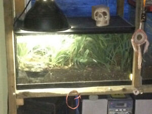 Spider with full tank and full set up