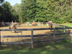 Horse boarding by the Ganaraska Forest Peterborough Peterborough Area image 2