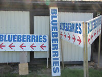 Blueberry signs