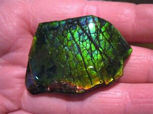 Variety of Ammolite Pieces