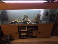 X large fish tank