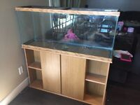 55g Fish tank and stand