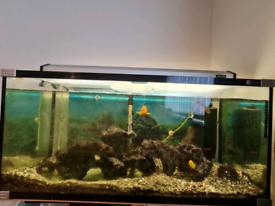 fish tank 140l