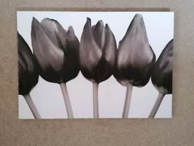 Canvas Print picture of tulips