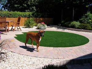 Perfect Grass! No Cutting-No Watering-No Fertilizer Kitchener / Waterloo Kitchener Area image 10