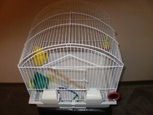 All metal 16 X 16 Budgie bird cage with toys