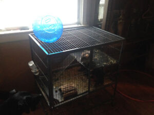 Chinchilla 450 or best offer
