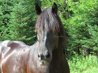 Cours d'équitation / Horseback riding lessons