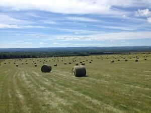 Large Round Hay Bales for Horses and Cattle