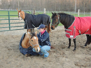Great Lakes Stables Freelance Services