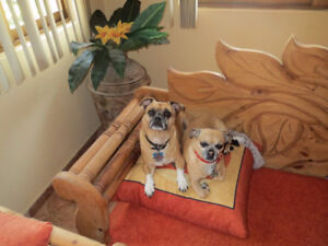 Dog/Cat sitter available in Penticton