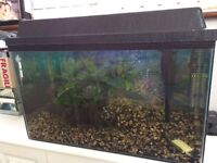 75 litre fish tank with extras