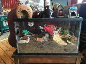 Hermit crabs with every thing you could need