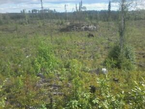 vacant cut over land,surface rights call 1-204649-2487 for detai