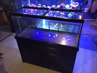 80 gal Fish Tank with Stand, Optional Lights
