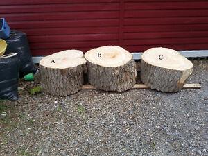 tranche de tronc d'arbre