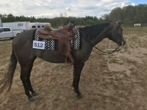 Reining/All Around Show Horse For Sale
