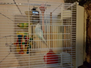 3 budgies and cage. Need gone best offer