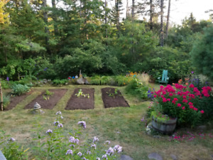 Want to have a vegetable garden?