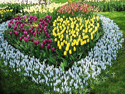 Blumen mal anders verschenken: schön arrangiert in den Garten gepflanzt. (© Thinkstock via The Digitale)